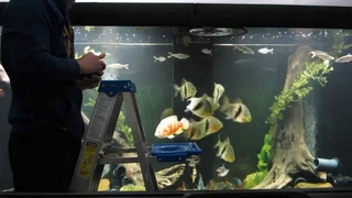 Huge Fish Tank Feeding
