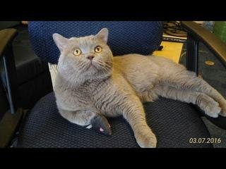 Кот ругается матом (почти)) и требует еду. Кот ругается на хозяина. Cat swears at the owner
