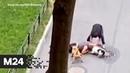Петербуржец прикрыл собой собаку от агрессивных бойцовых псов - Москва 24