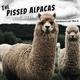 The Pissed Alpacas - April 30, 2020: International Jazz Day