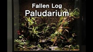 쓰러진 통나무 팔루다리움 'Fallen Log In The Woods' Nepenthes Paludarium  이끼, 정글플랜츠,식충식물 팔루다리움 실내에 정글 만들기