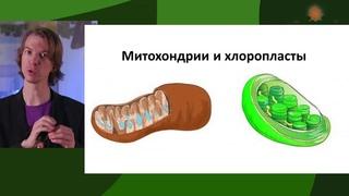 Происхождение жизни. ONLINE-трансляция с Ярославом Поповым