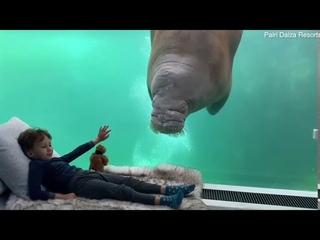 Подводная гостиница в Бельгии с видом на моржей. Видео из семейного номера