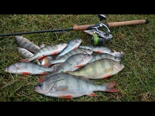 ВОБЛЕРА МАХОНИ спасли рыбалку !!! Хороший КРУПНЫЙ ОКУНЬ на Свири , ЖЕРЕХ и ЩУКА у нас !!!