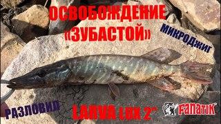 """LARVA LUX. Тестирование новинки 2017 года - fanatik larva lux 2""""."""