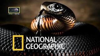 Самые опасные и необычные змеи в мире. Документальные фильмы National Geographic. Nat Geo WILD HD
