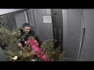 Воры украли елку в Екатеринбурге