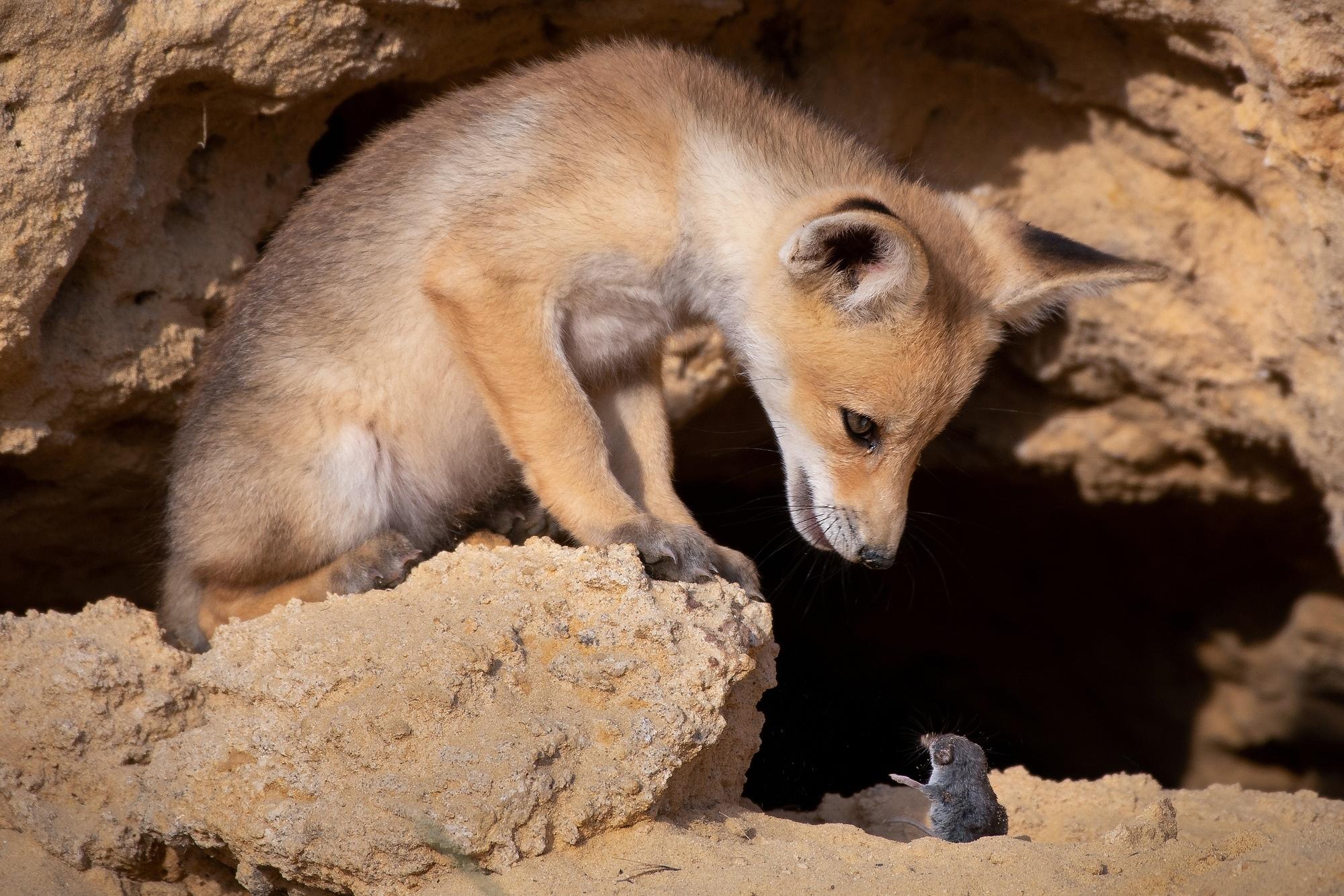 Финалисты премии Комедийной фотографии дикой природы 2020 года выглядят как отличные заготовки для мемов (часть 1)
