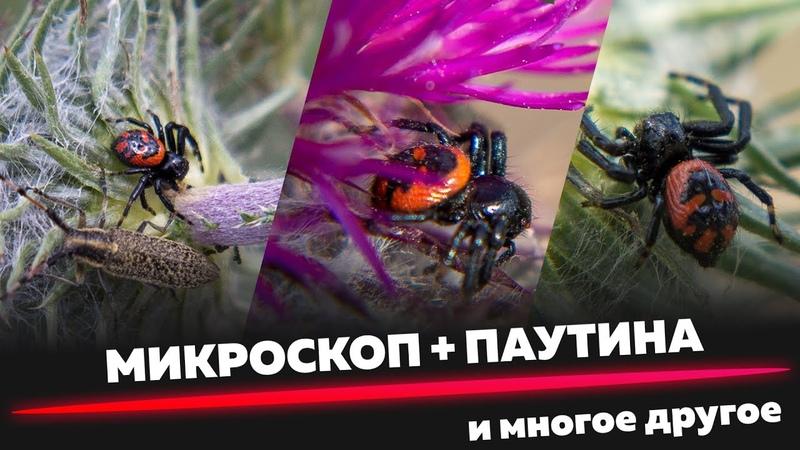 ПАУТИНА ПОД МИКРОСКОПОМ Охота и кормление паучка Особенности окраса и линьки Паучий блог №2