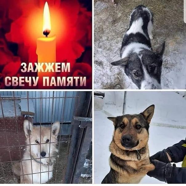 картинки свеча памяти животным поведение является