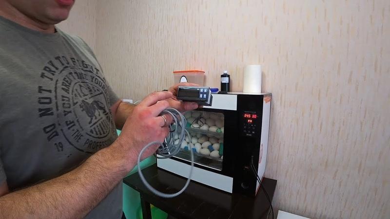 Инкубация по датчику на скорлупе бонус камера следящая за инкубатором