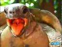 Секс у черепах