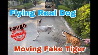 Fake Tiger Moving vs Flying Real Dog Funny Video TRY NOT TO LAUGH #SummerTube