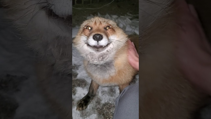 Finnegan Fox wants mom to come outside