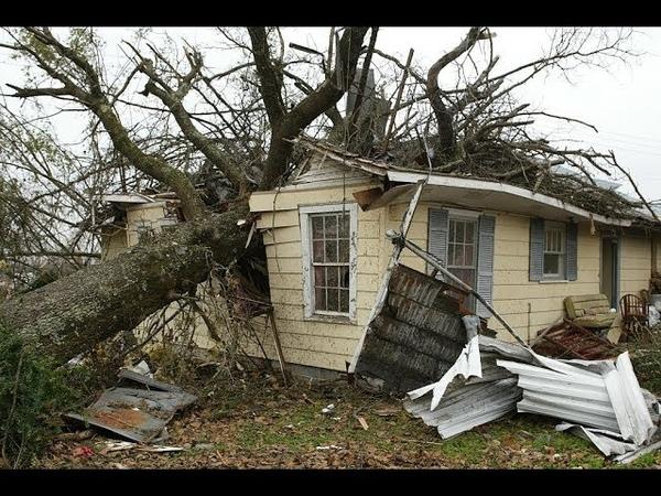 Огромное сухое дерево может в любой момент обрушиться на наш дом