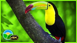 Breathtaking Colors of Nature in 4K III 🐦Beautiful Nature - Sleep Relax Music 4K UHD TV Screensaver