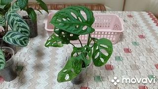 Комнатные растения. Цветочное ассорти.