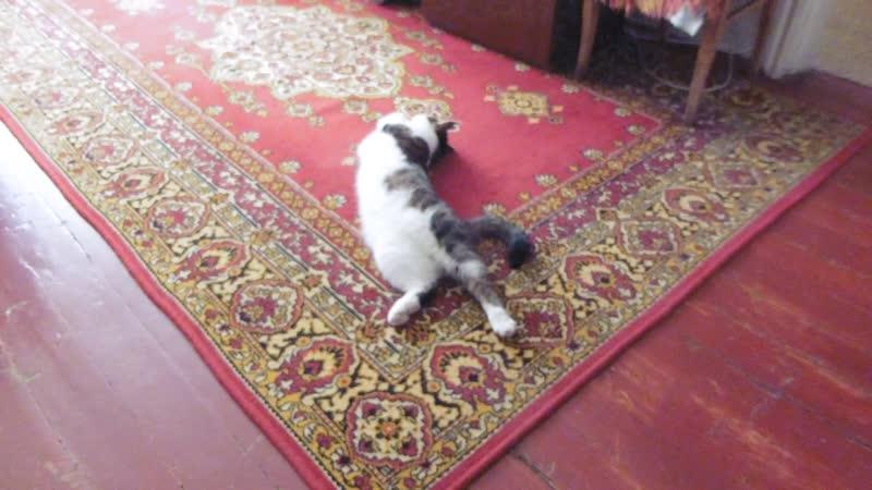 КВЕРХУ БРЮХОМ... (кот Семка лежит на сквознячке, снова стало жарко).