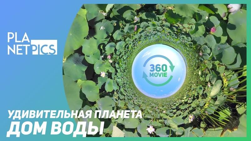 VR 360 Великие пресные воды Дом воды озвучка КУРАЖ БАМБЕЙ
