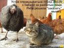 Веселые картинки. Смотреть смешные приколы про котов.