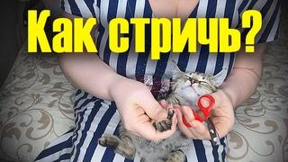 Как правильно подстричь когти котенку в домашних условиях?