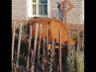 kazak.tv___BmAPEsfhG9I___.mp4