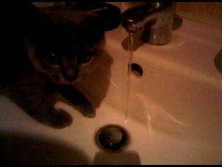)))) Мой кот пьёт воду, это пздц