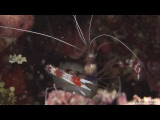 Bunaken Night Dive