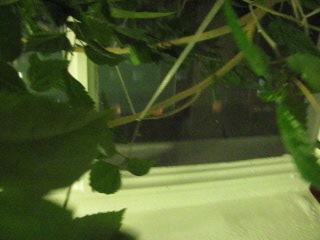 27 06 2012г наша роза красавица