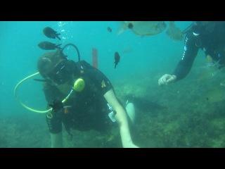 Дайвинг 1 Черное море август 2013