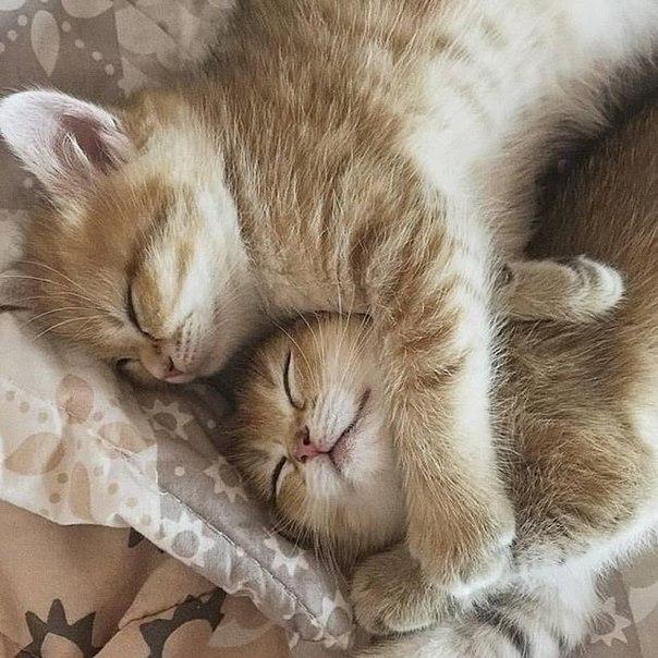 картинка спи сухенька ваш вкус