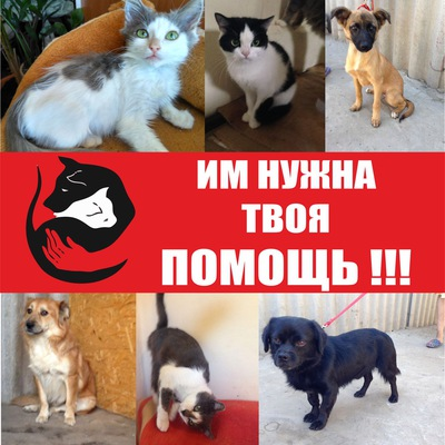 Сухой корм Royal Canin Mini Sterilised для собак