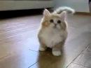 смешное видео поющих котов
