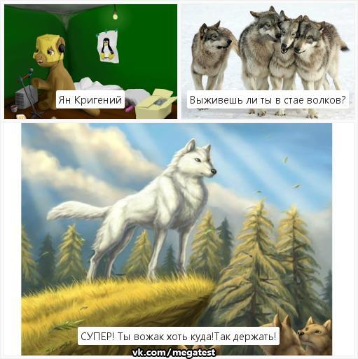 тесты про волков в картинках сравнительно новый вид