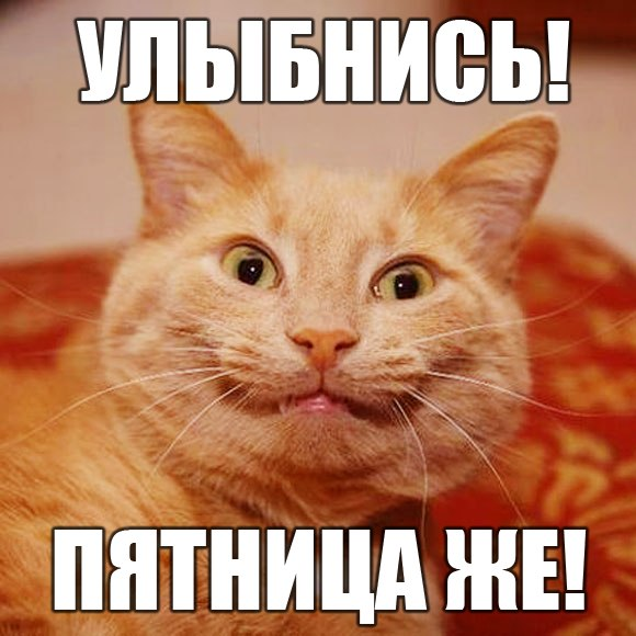 Картинки котята пятница