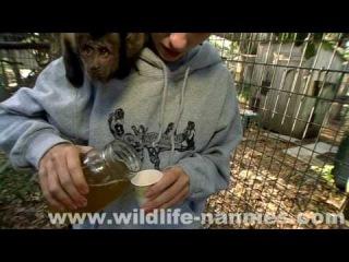 Capuchin Monkey Tessa