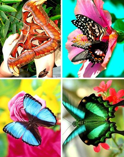 Открытка с тропической бабочкой, день рождения