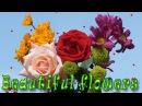Beautiful flowers. Красота распускающихся цветов. Обалденное видео!