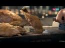 Cucina con Ramsay 5: Pollo arrosto ripieno a base di Chorizo