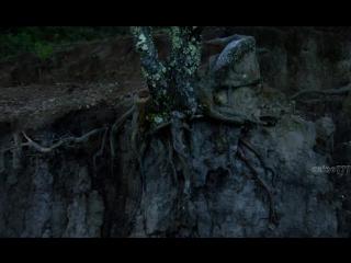 Неукрощенные / La regi?n salvaje (2016)