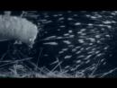 BBC Жизнь млекопитающих 04 Грызуны Познавательный природа 2002