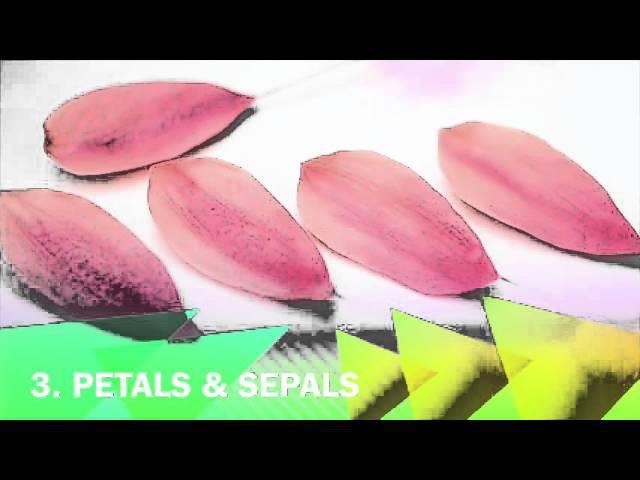 Chocolate flower Cymbidium Orchid VIDEO TUTORIAL by ChokoLate