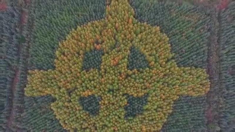 Кельтский крест в лесу Донегал в Ирландии