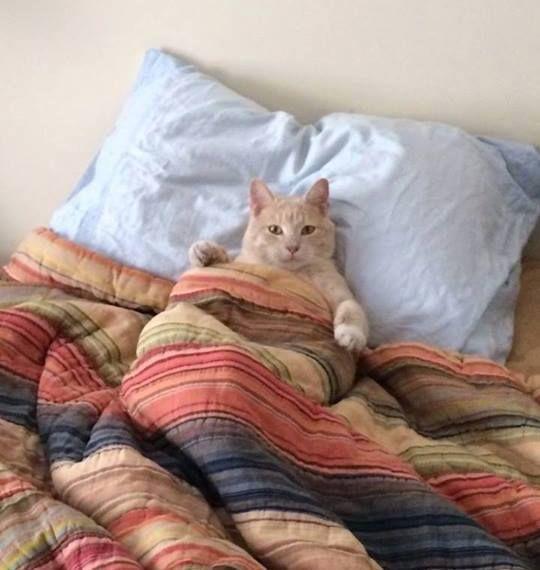 фото доброе утро как спал сегодня общем, если