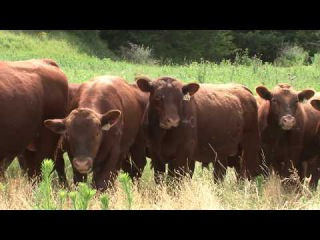 The American Rancher featuring Cross Diamond Cattle Company