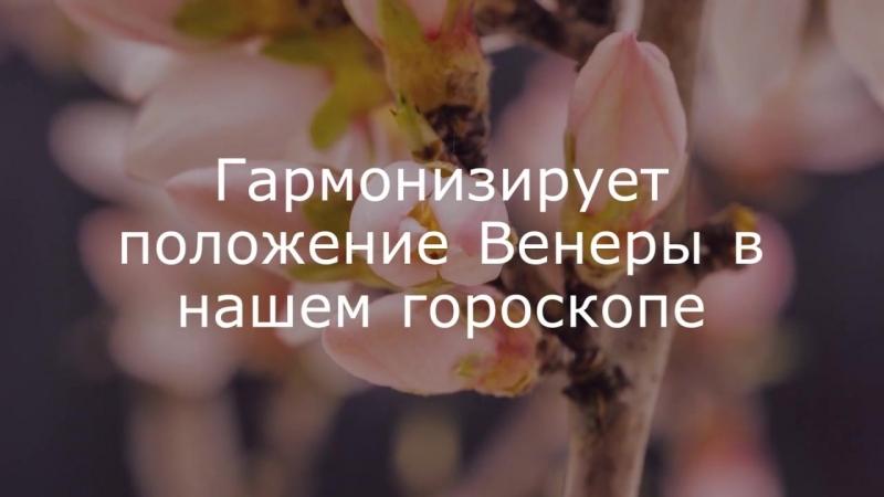 Ягья Лакшми