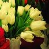 100 тюльпанов