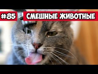Смешные животные - как пьют коты | Bazuzu Video ТОП подборка 85 декабрь 2017