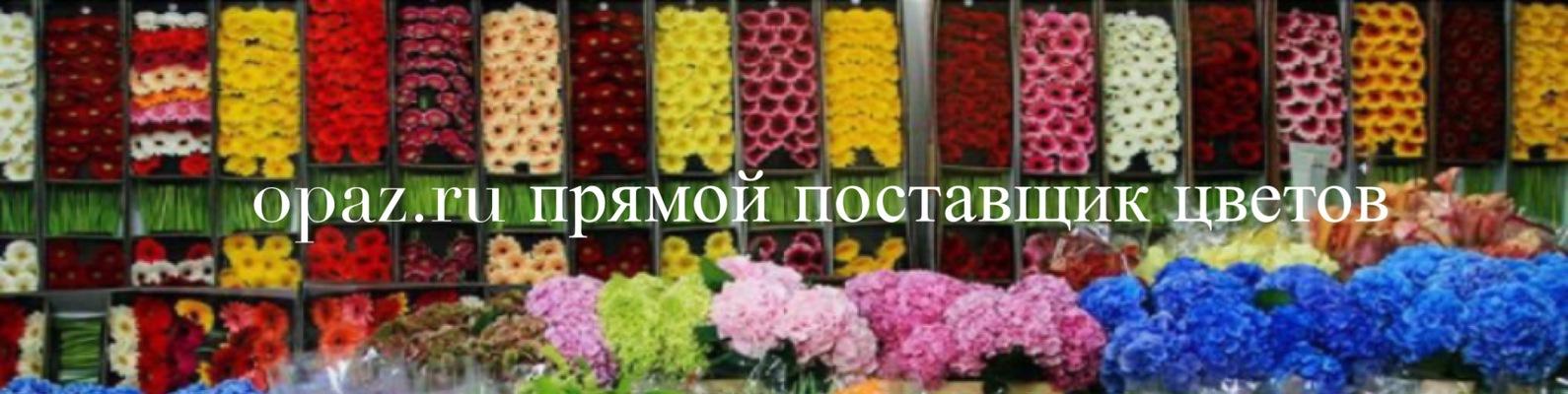 Поставщики цветов в уфе оптом