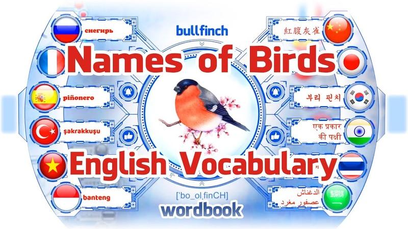 Ders Kuşların İsimleri | Resimlerle İngilizce Kelime Öğrenin | Kelime kitabı